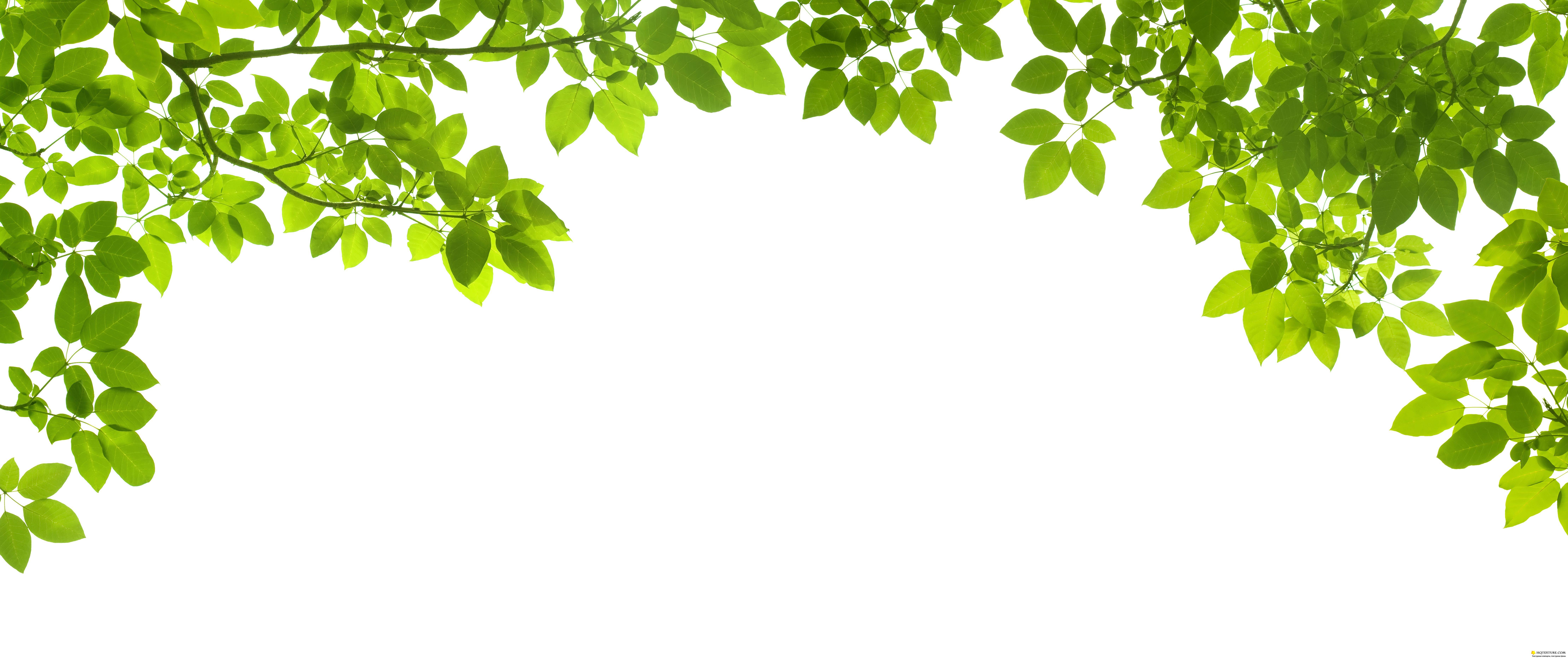 Green leave frame - UHQ Stock Photo | Рамки из зеленых ...