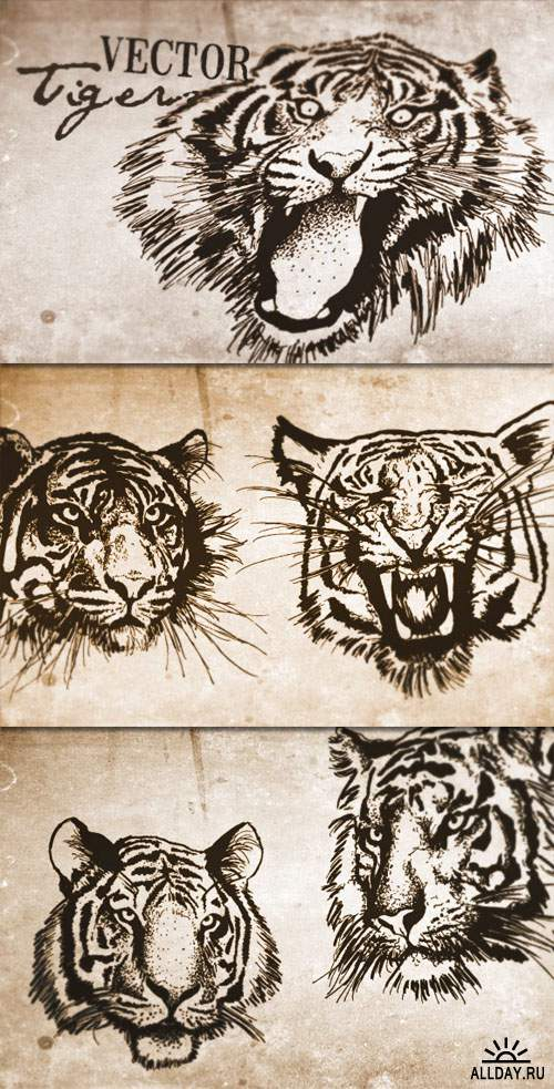 WeGraphics - Vector Tigers