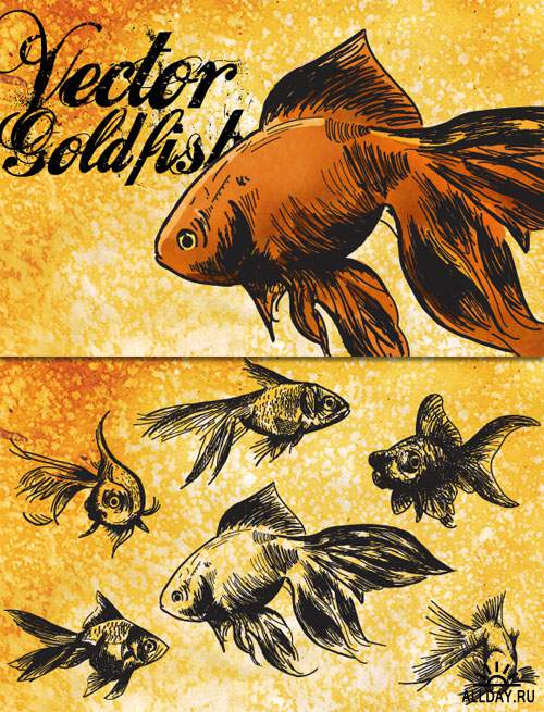 WeGraphics - Vector Goldfish